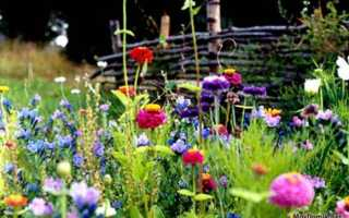 Цветущая лужайка своими руками — как вырастить мавританский газон или газон из клевера