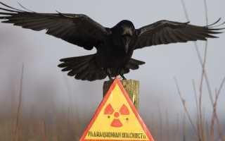 Детектор радиации своими руками