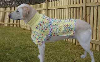 Как построить выкройку одежды для собак. Пошаговая методика