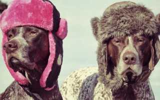 Как связать шапку для собаки спицами и крючком. Описания с зарубежных сайтов