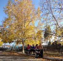 Осенние серьги-листья из бисера своими руками